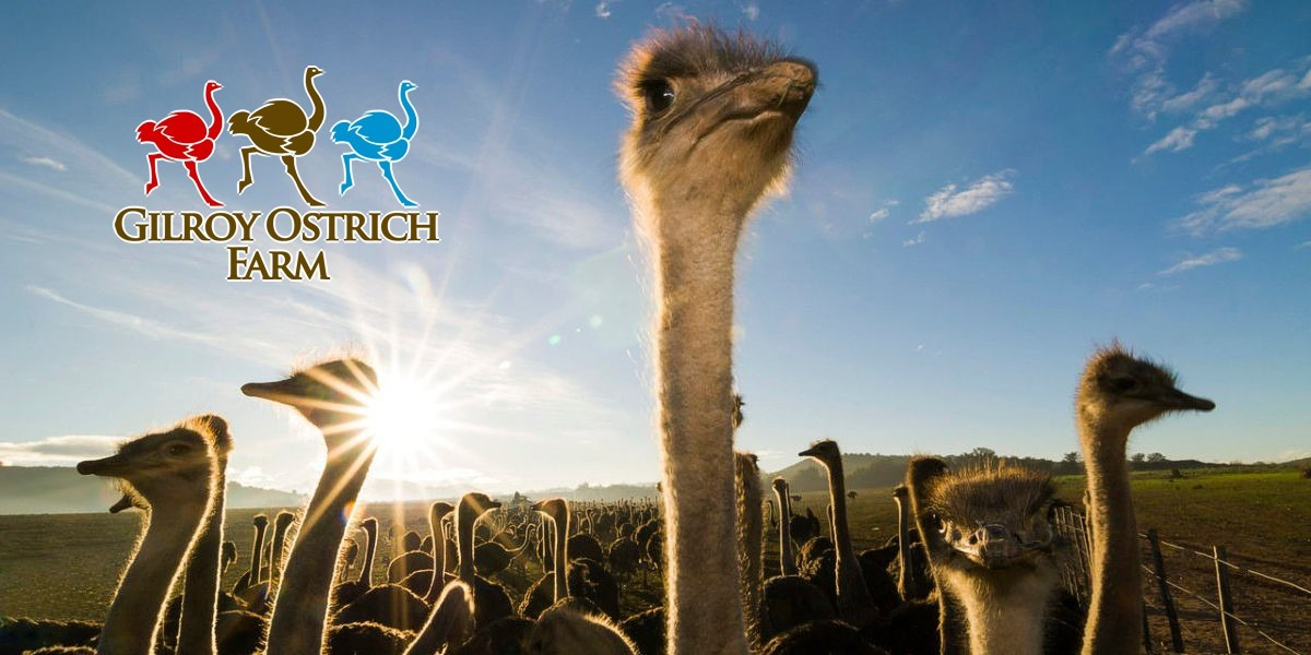 Gilroy Ostrich Farm - General Admission